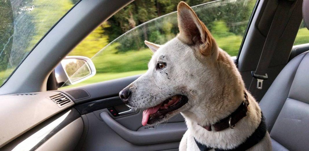 best dog car restraint