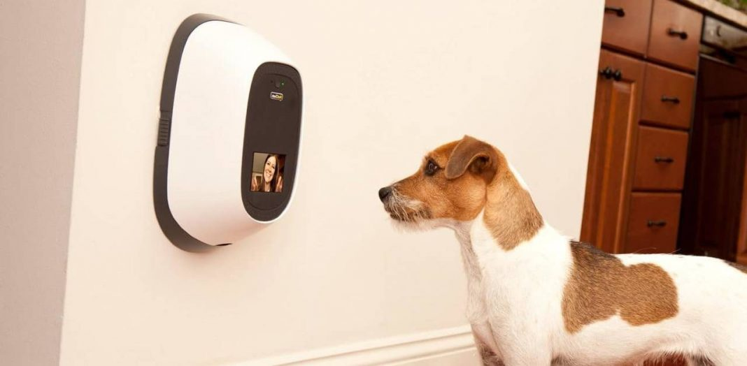 two way pet camera